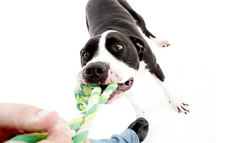 Dog Rope Toy For Medium Dogs