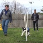 dog training for agility and great dog agility video