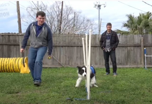 Spectacular Dog Training Can You Do This?