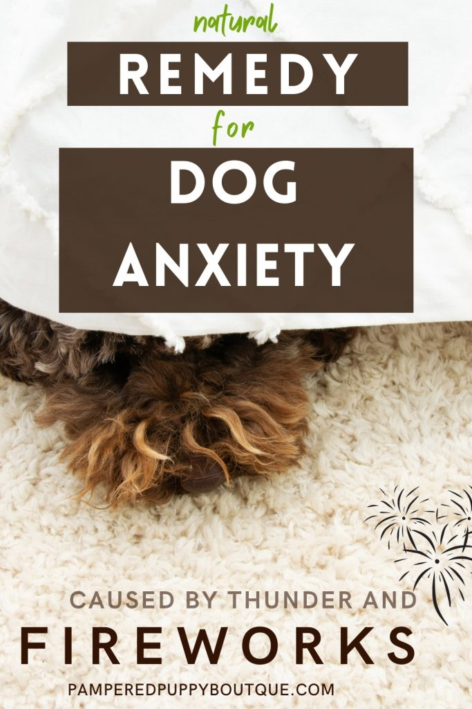 Simple natural way to calm dog anxiety over fireworks