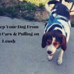 how to keep your dog from lunging at cars and pull on the leash