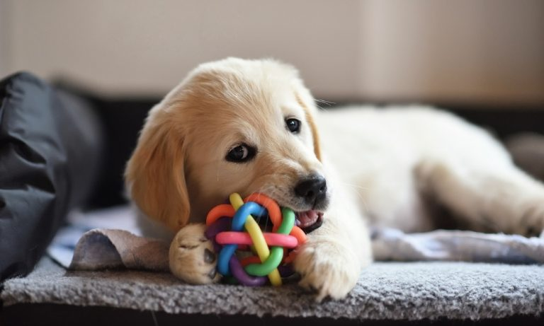 Best Puppy Toys to Keep Them Busy And Entertained