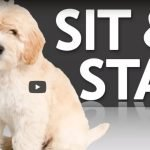Follow Zak's advice to get your puppy trained to sit and stay